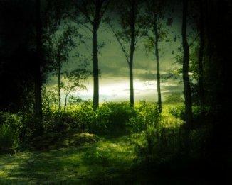 Through the Trees...[Open] 1679536szqjzwn8vs