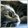Colectie de poze, avatare, semnaturi 858526tqdbrll7mr